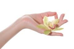 Dien yogapositie met de ingesloten bloem in stock afbeelding