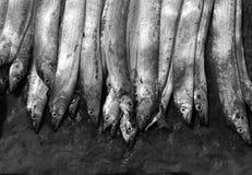 Dienbladen van vissen Stock Foto