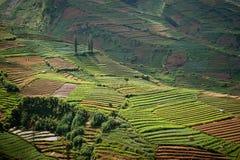dieng fields плато Индонесии java terraced Стоковое Фото