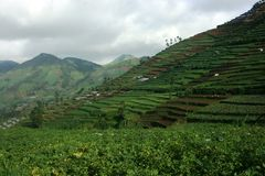 Free Dieng Plateau Royalty Free Stock Photos - 37513418