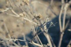 Dienst in het droge gras in de vroege lente Stock Foto