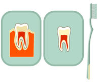 Diente y cepillo de dientes Fotos de archivo libres de regalías