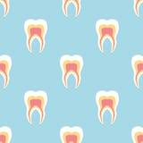 Dientes blancos con las raíces en un fondo de la turquesa Modelo inconsútil dental del vector stock de ilustración