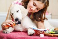 Dientes de la limpieza de la muchacha de su perro en casa Imágenes de archivo libres de regalías