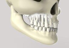 dientes de la representación 3D Fotos de archivo libres de regalías