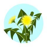 Dientes de león amarillos del ejemplo del vector con las hojas y la flor Logotipo floral de la botánica del jardín del icono del  ilustración del vector