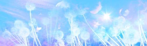 Dientes de león blancos con salida del sol de los pájaros Imagen de archivo libre de regalías