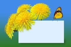 Dientes de león con la mariposa Imagen de archivo libre de regalías