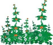 Dientes de león e hierba florecientes en un prado. ilustración del vector