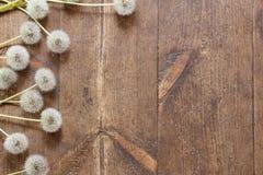 Dientes de león en fondo de madera envejecido fotografía de archivo libre de regalías