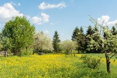 Dientes de león florecientes amarillos y cielo azul, Apple-árboles florecientes y colmenas en un jardín rural, día soleado de la  Foto de archivo
