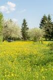 Dientes de león florecientes amarillos y cielo azul, Apple-árboles florecientes y colmenas en un jardín rural, día soleado de la  Foto de archivo libre de regalías