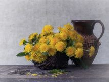 Dientes de león florecientes - llave a partir de la primavera Imagenes de archivo