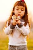 Dientes de león que soplan del niño Foto de archivo libre de regalías