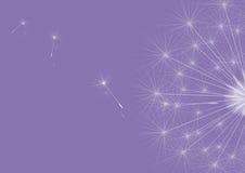 Dientes de león violetas Libre Illustration