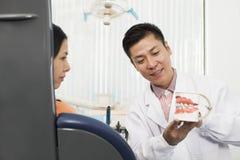 Dientes de Showing Model Of del dentista al paciente femenino Fotografía de archivo libre de regalías