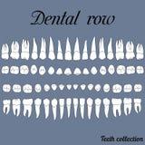 Dientes dentales de la fila Imágenes de archivo libres de regalías