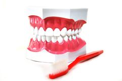 Dientes falsos aislados (dentaduras) y cepillo de dientes Fotos de archivo