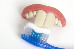 Dientes falsos y cepillo de dientes Imágenes de archivo libres de regalías