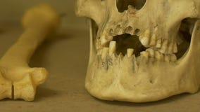 Dientes humanos viejos del cráneo metrajes