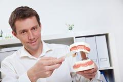 Dientes que aplican con brocha del dentista Foto de archivo