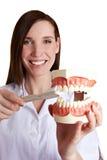 Dientes que aplican con brocha del dentista de sexo femenino Foto de archivo libre de regalías