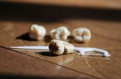 Dientes y diente sanos de la cavidad en fondo marrón Imagen de archivo libre de regalías