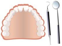Dientes y herramientas dentales Fotografía de archivo libre de regalías