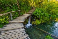 Diep bos met duidelijk water Plitvice, Kroatië Stock Afbeeldingen