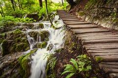 Diep bos met duidelijk water Plitvice, Kroatië Stock Foto