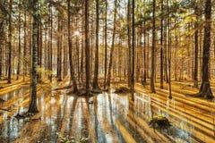 Diep bos op zonsondergang Stock Afbeeldingen