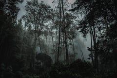Diep in de donkere wildernis van Amazonië stock afbeeldingen