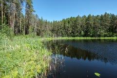 diep donker bosmeer met bezinningen van bomen en groen gebladerte royalty-vrije stock fotografie