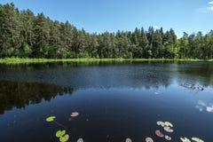 diep donker bosmeer met bezinningen van bomen en groen gebladerte stock foto