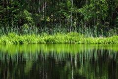 diep donker bosmeer met bezinningen van bomen en groen gebladerte stock afbeelding