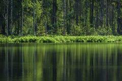 diep donker bosmeer met bezinningen van bomen en groen gebladerte stock foto's