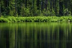 diep donker bosmeer met bezinningen van bomen en groen gebladerte royalty-vrije stock afbeeldingen