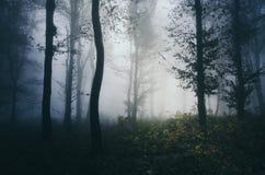Diep donker hout met dikke mist stock fotografie