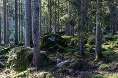 Diep in een bemost oud bos stock afbeeldingen
