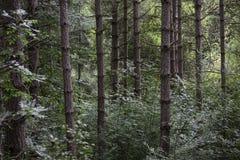 Diep in het bos Stock Fotografie