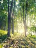 Diep in het bos Stock Foto's