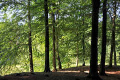 Diep in het bos Royalty-vrije Stock Afbeelding