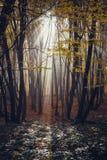 Diep in het bos in de bergen Royalty-vrije Stock Fotografie