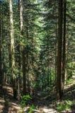 Diep in het bos in de ochtend Royalty-vrije Stock Fotografie