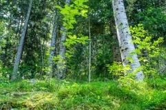 Diep in het bos in de ochtend Royalty-vrije Stock Foto