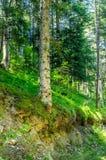 Diep in het bos in de ochtend Stock Fotografie