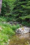 Diep in het bos op een de zomerdag Royalty-vrije Stock Foto