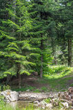 Diep in het bos op een de zomerdag in de Pyreneeën Royalty-vrije Stock Foto's