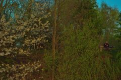 Diep in het donkere en griezelige bos, Mensen op een Bank eten en bloeiende bomen die Stock Afbeelding