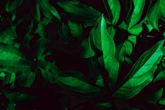 Diep langzaam verdwenen groene bladerenachtergrond Creatieve lay-out stock afbeeldingen